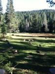 geese in meadow25